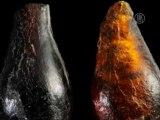 Найдены самые древние насекомые в мире
