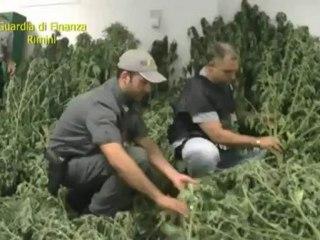 Tra i peperoni e i pomodori la marijuana: arrestato 28enne di Cattolica