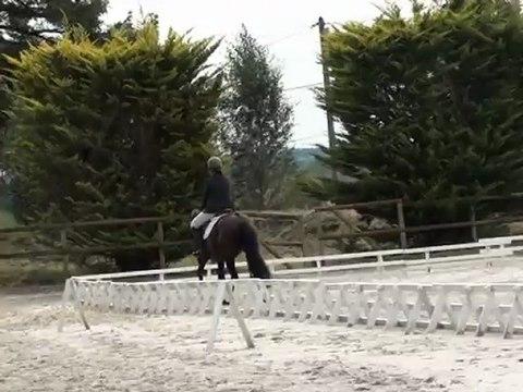 Un amour de Noé - dress CC4ans poneys à  Beaumont