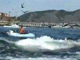 Les baleines s'approchent de la cote californienne
