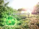 LA BAMBOUSERAIE AU PARC DE LA VILLETTE