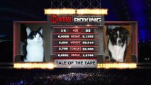 S'entendre comme chien et chat; combat de boxe fun
