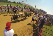 Raw Video: The Great Bull Run Brings Running With The Bulls To America