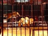 Steeve Caplot, dompteur de fauves, présente ses bébés tigres