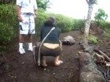 Galapagos Tortoise - Galapagos Land Tours - Galapagos Land Based Tours - Galapagos Isabela