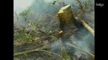 Des zones polluées par Tchernobyl sont parties en fumée
