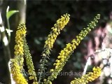 Flora-Wild flowers-DVD-122-2