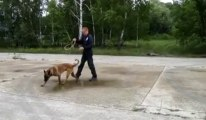 Les chiens pisteurs de la police fédérale à Nivelles