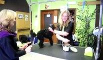Marylor Dufour toilette les chiens à Mons