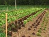 """""""Sauvons une ferme bio ! """" appel citoyen de Stéphanie Muzard Le Moing"""