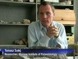 World's oldest turtle fossils found in Poland