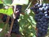 """Pour vous en Pays de Savoie : """"Aides agriculture"""""""