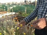 Des potagers commencent à pousser sur les toits de Paris
