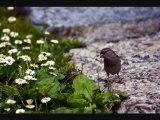 16 Nos Amis les Oiseaux