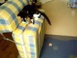 Vidéo de chat rigolo,fait par moi et mon cousin