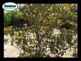 Achat Vente Maison  Arles  13200 - 150 m2