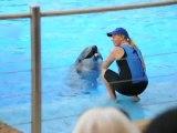 DSC_7802 Durban, Afrique du Sud, dauphin au complexe marin uShaka Marine World