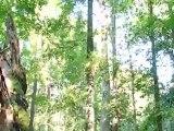 Bialowieza - Der letzte Urwald Europas | Global 3000