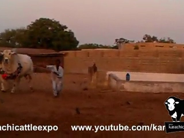 Dilpasand Cattle Farm 2012