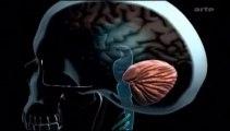 Drogues et cerveau - Cannabis, un défi pour la science.