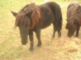 Les pouliches des Poneys de Sophie, poney-club. SDC11612
