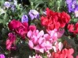Fleurs, fruits et légumes à planter en automne - Conseils d'expert - Quejadore.com