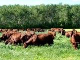 Cayır mera tohumu yetıstırılıcıgı,cayır mera tohumu fiyatları,cayır mera tohumu satılık,cayır mera tohumu gübreleme,cayır mera tohumu üretimi