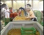 Ο υπουργός αγροτικής ανάπτυξης απαντά για την τιμή της ελιάς φέτος