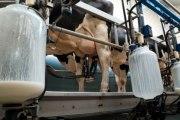 Les produits laitiers ne sont pas vos amis