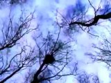 "LYLAC - videoclip ""Tree"" - Official Videoclip"