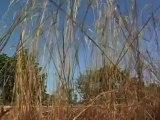 FASO 2012 : 24/10/2012 - Etape 6 : Bobo - Debougou (170 km)