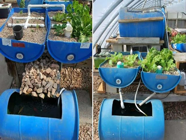 Home Aquaponics – You Can Set Up A Homemade Aquaponics System In No Time
