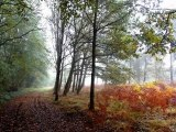 Bretagne d'automne ( mes photos d'automne )