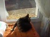 le chat  BENJY et ses betises