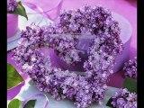 La valse des lilas. Daniel Guichard.