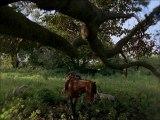 Post Tenebras Lux (2012) online watch www.hdmegavideo.net