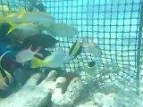 poissons du lagon dans parc à poissons