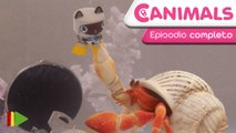 Canimals - 03 - Latas submarinas