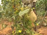 Changing Soils - Improving the Effectiveness, Efficiency and Sustainability of Fertilizers
