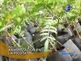 Ayacucho Instituciones participan en arborizacion de cerro La Picota