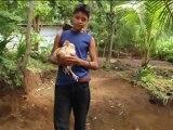 Il fait l'amour avec des poules