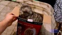 Chat dans une boite de carton