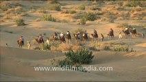 1654.Camel Safari in Sam Sand Dunes.mov