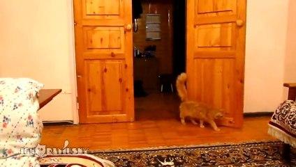 Chat à peur des sauts de Mario - Vidéo Dailymotion