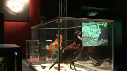 « Bêtes de sexe, la séduction dans le monde animal » au Palais de la découverte