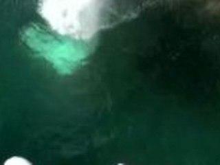 Die Klippenspringer von Acapulco