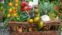 Rétrospective Jardins de Tomates 2012