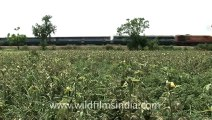 Indian countryside train-1.mov