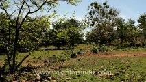 Indonesia-bali-biguin-4.mov