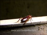 Insects-cockroaches-1.mov